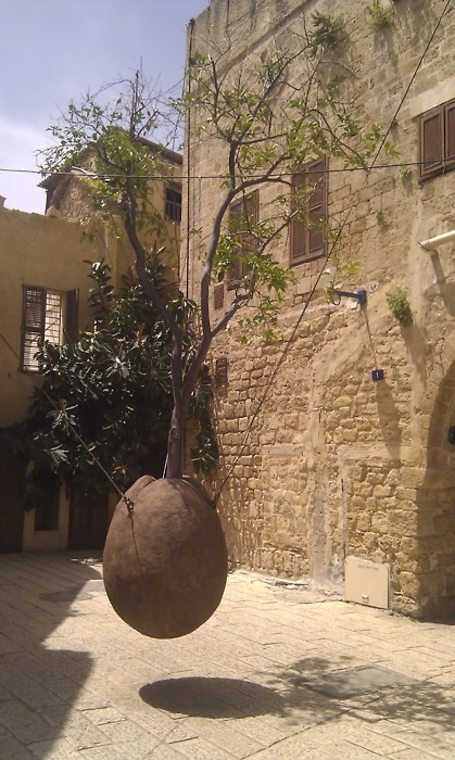 A floating orange tree in Jaffa.